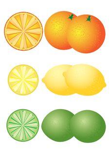 Free Set Of Citrus Fruits Royalty Free Stock Photo - 20471545