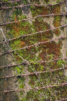 Free Barbed Wire With A Moss Background Stock Photos - 20471743