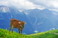 Free Swiss Cow Royalty Free Stock Image - 20471856