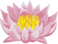 Free Lotus Royalty Free Stock Photography - 20472007