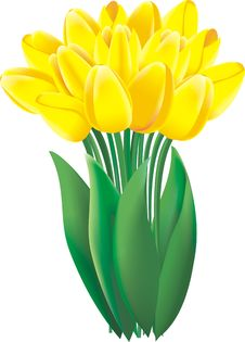 Free Yellow Tulips Stock Photos - 20472013