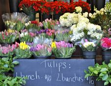 Free Tulip Stand Stock Photography - 20473982
