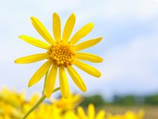 Free Starry Flower Royalty Free Stock Photos - 20474348