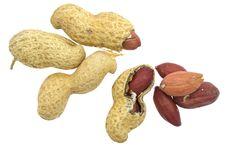 Free Peanut Isolated On White Royalty Free Stock Photos - 20476018