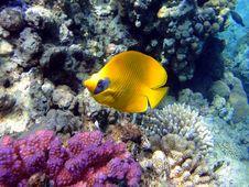 Free Fine Fish Stock Photo - 20477350