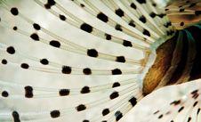Lion Fish Tail Texture Stock Photo