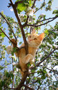 Free Young Ginger Cat Stock Photos - 20481103