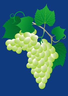 Free Green Grape Royalty Free Stock Photography - 20480627