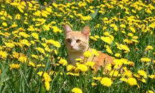 Young Ginger Cat Stock Images