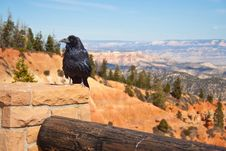 Free Raven At Bryce Canyon Royalty Free Stock Image - 20481196