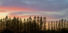 Free Trees Silouhette Against A Sunset Sky Stock Image - 20481251