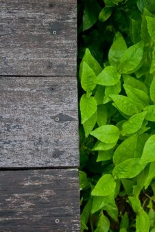 Free Wooden Floor With Fresh Leaf Royalty Free Stock Images - 20483829