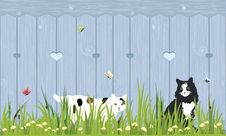 Free Cats Sitting In A Grass Royalty Free Stock Photo - 20484185