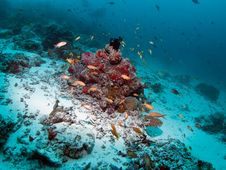 Free Coral Reef Stock Images - 20484774