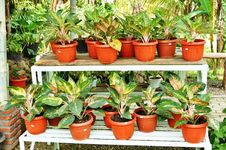 Ornamental Plants Shop Stock Photo