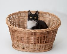 Free BW Cat In The Basket Isolated Stock Photo - 20485450