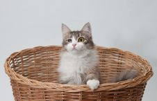 One-eyed Cat In The Basket Isolated Stock Photos