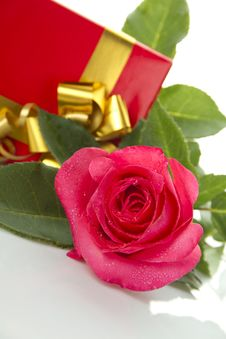 Red Rose, Gift Box Stock Photo