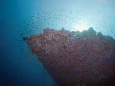 Sunrise Underwater View