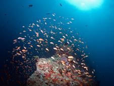 Free Coral Reef Royalty Free Stock Images - 20487459