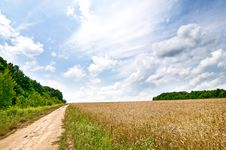 Free Golden Field Full Of Wheat Seed. Stock Photo - 20487910