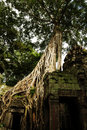 Free Tree Root Sit On A Ruin Ancient Building Stock Images - 20497594