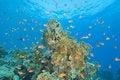 Free Beautiful Coral Reef Scene Royalty Free Stock Photos - 20497948