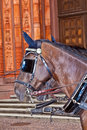 Free Head Of Stagecoach Horses In Detail Royalty Free Stock Photography - 20498167
