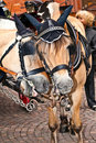 Free Head Of Stagecoach Horses In Detail Royalty Free Stock Photos - 20498178