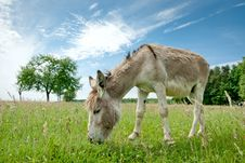 Free Donkey Royalty Free Stock Photos - 20495738