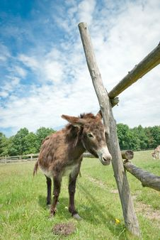 Free Donkey Royalty Free Stock Photography - 20495747