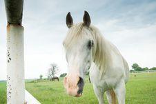 Free Horse Stock Photo - 20495800