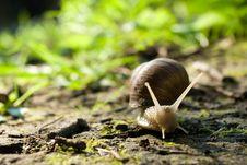 Free Snail Stock Image - 20495821