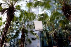 Free Street Light With Plants And Modern Building Royalty Free Stock Image - 20496826