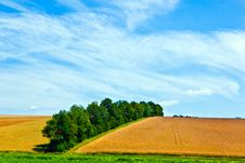 Free Landscape With Row Of Trees Royalty Free Stock Photos - 20497938
