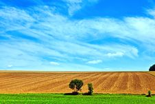Free Landscape With Row Of Trees Stock Image - 20497951