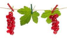 Free Redcurrant On A Clothesline Royalty Free Stock Photos - 20498018