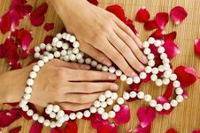 Free Hands On Rose Petals Royalty Free Stock Photos - 20498358