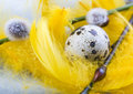 Free Easter Egg Stock Photo - 2052540