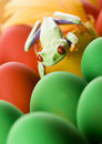 Free Frog And Eggs Royalty Free Stock Images - 2052599