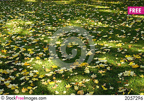 Free Sun Shade And Leaves 02 Royalty Free Stock Image - 2057296