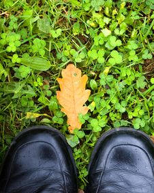 Free Autumn Feet Royalty Free Stock Image - 2052316
