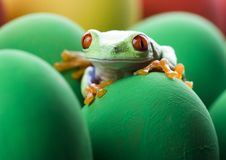 Free Frog And Eggs Stock Photography - 2052612