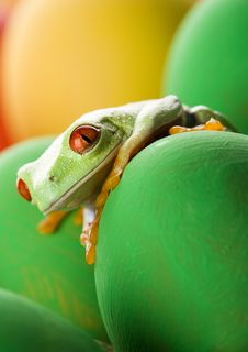Free Frog And Eggs Stock Photos - 2052613