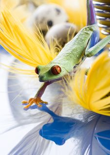 Free Crazy Frog Stock Image - 2052661