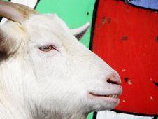 Free Goat Stock Photo - 2052690