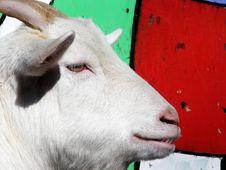 Free Goat Royalty Free Stock Image - 2052736