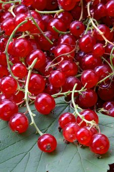 Free Red Currant On The Table Royalty Free Stock Photos - 2053528