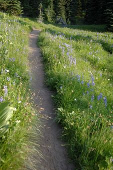 Free Mountain Trail With Wild Flowers Stock Photos - 2057083