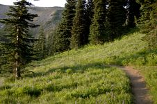 Free Mountain Trail With Wild Flowers Stock Images - 2057084